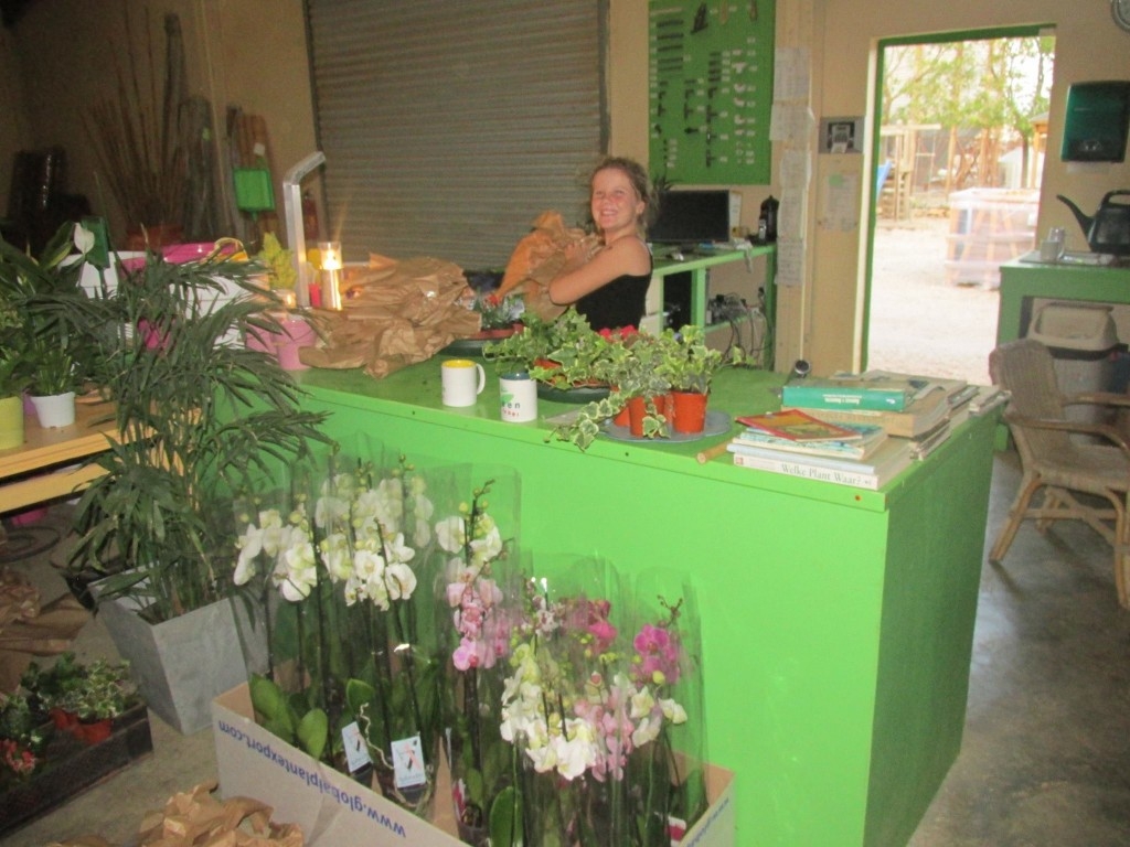 Pakjes avond was vroeg dit jaar! Prachtige kamerplanten uit Holland!