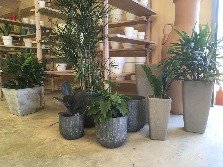 Kamerplanten-5