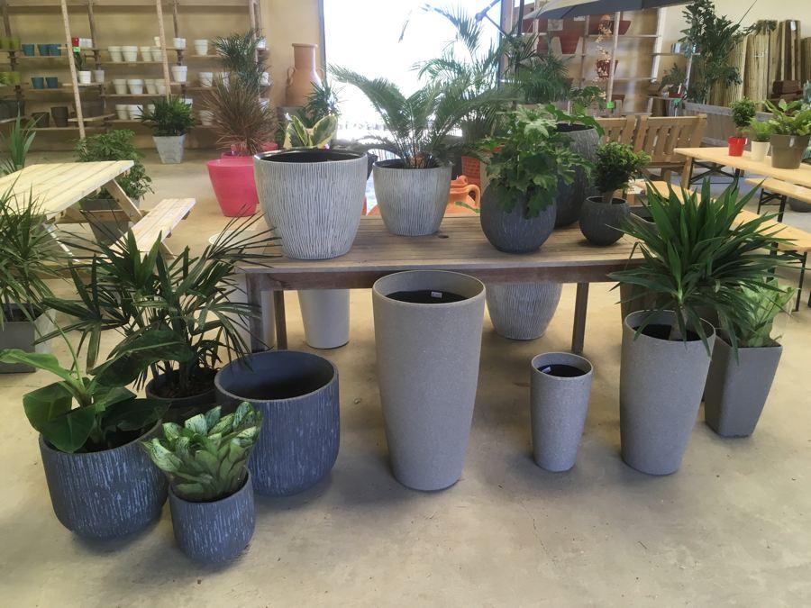 Kamerplanten-9