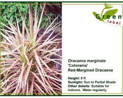Kamerplanten-Bonaire