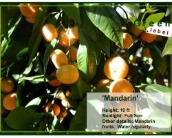 Fruit-Greenlabel-Bonaire