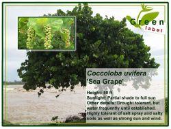 Bomen-greenlabel-Bonaire