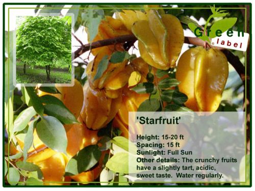 Fruit-Greenlabel-Bonaire